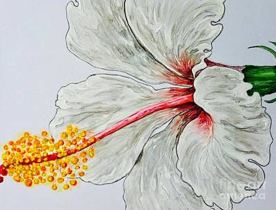 Painting - Hibiscus White And Red by Sheron Petrie