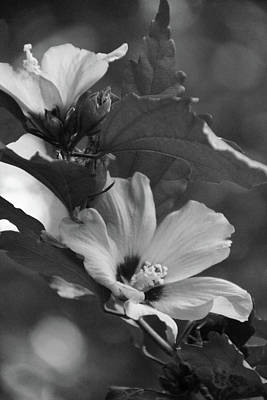 Hibiscus5586 Bw Art Print by Carolyn Stagger Cokley