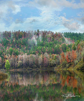 Hickory Forest Art Print