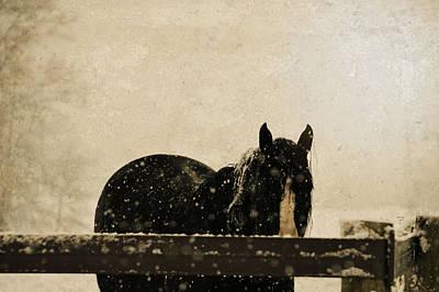 Pony Mixed Media - Hickory by Trish Tritz