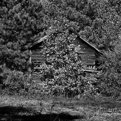 Photograph - Hidden Barn by Patrick M Lynch