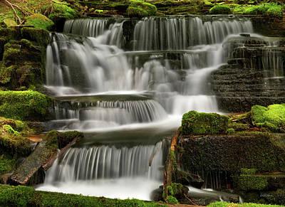 Photograph - Hidden Beauty by Leland D Howard