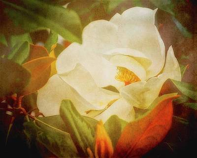 Photograph - Hidden Beauty, Magnolia Flower by Flying Z Photography by Zayne Diamond