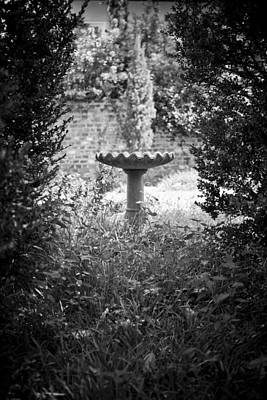 Bird Bath Photograph - Hidden Bird Bath  by Dustin K Ryan