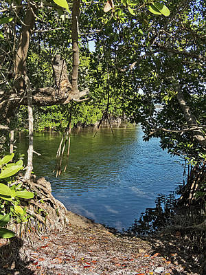 Photograph - Hidden Cove In The Mangroves by Bob Slitzan