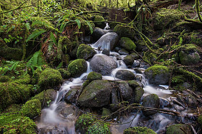 Photograph - Hidden Creek by Jaden Nyberg