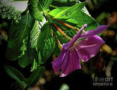 Photograph - Hidden by Diana Mary Sharpton