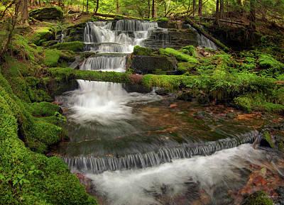 Photograph - Hidden Forest Beauty by Leland D Howard