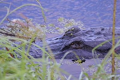 Photograph - Hidden Gator by Warren Thompson