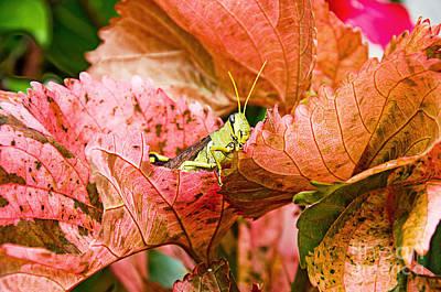 Photograph - Hidden Grasshopper by Andee Design