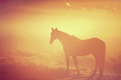 Photograph - Hidden In Golden Fog by Jenny Rainbow