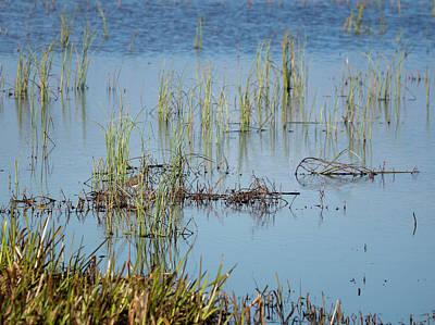 Photograph - Hidden In The Grass The Wood Sandpiper  by Ismo Raisanen