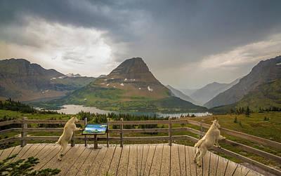 Hidden Lake Overlook // Glacier National Park Art Print