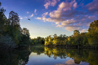 Alligator Photograph - Hidden Light by Marvin Spates