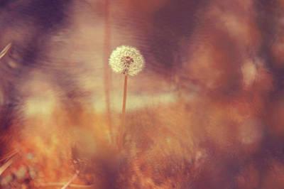 Photograph - Hidden Magic World by Jenny Rainbow