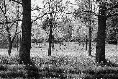 Photograph - Hidden Orchard Black And White by Kathi Mirto