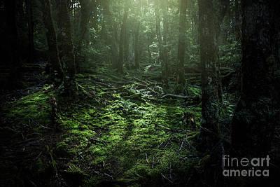 Photograph - Hidden Places by Evelina Kremsdorf