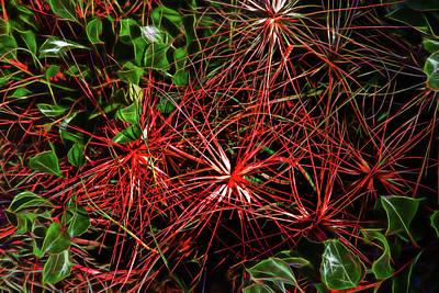 Photograph - Hidden Red Beauty by Miroslava Jurcik