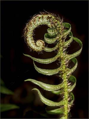 Photograph - Hidden Spider by Jean Noren