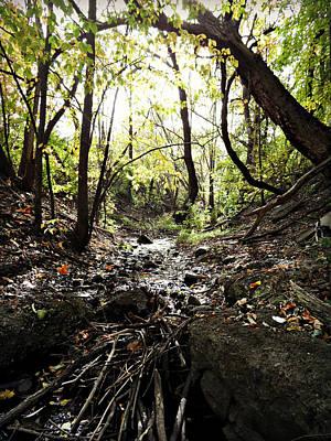 Photograph - Hidden Stream  by Cyryn Fyrcyd