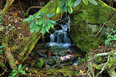 Photograph - Hidden Treasures by HH Photography of Florida