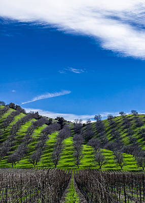 Grapevine Photograph - Hidden Valley Hills by David Smith