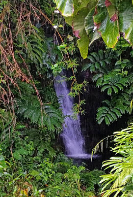 Photograph -  Small Hidden Waterfall  by Pamela Walton