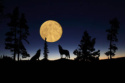 Night Photograph - Hidden Wolves by Shane Bechler
