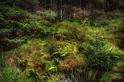 Photograph - Hidden Woodland. Rest And Be Thankful. Scotland by Jenny Rainbow