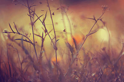Photograph - Hidden World Of Wild Grass by Jenny Rainbow