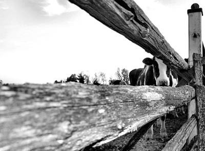 Split Rail Fence Photograph - Hide And Seek by David  Hubbs