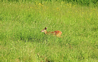 Photograph - Hide And Seek by Debbie Oppermann