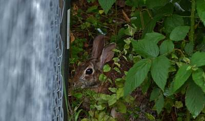 Photograph - Hide And Seek by Eileen Brymer