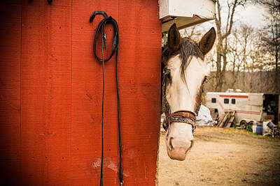 Clydesdale Photograph - Hide And Seek by Kristopher Schoenleber