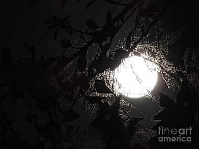 Photograph - Hide And Seek by Robert Ball