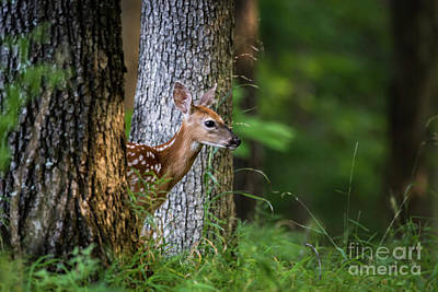 Photograph - Hide N Seek by Andrea Silies