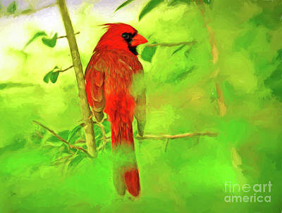 Cardinal Photograph - Hiding Behind The Leaves - Male Cardinal Art by Kerri Farley