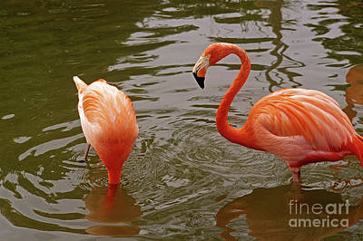 Photograph - Hiding Flamingo by Jim Corwin