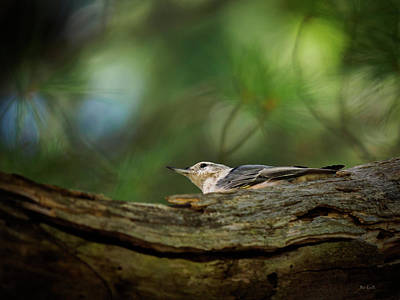 Art Print featuring the photograph Hiding From The Hawk by Bob Orsillo