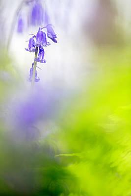 Photograph - Hiding In Color - Bluebells by Dirk Ercken