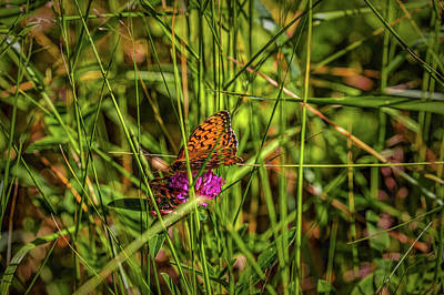 Photograph - Hiding In Green #h7 by Leif Sohlman