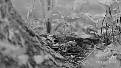 Photograph - Hiding by Joshua McCullough