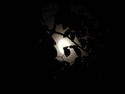 Photograph - Hiding - Leaves Over Moon by Menega Sabidussi