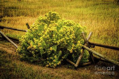 Photograph - Hiding Place by Jon Burch Photography