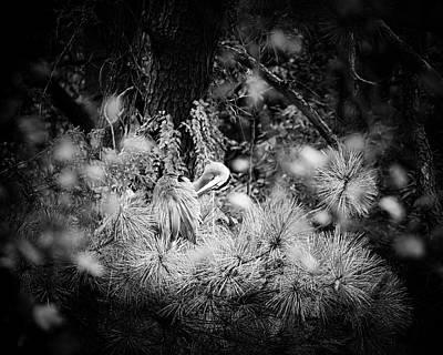 Photograph - Hiding Place by Michael McStamp