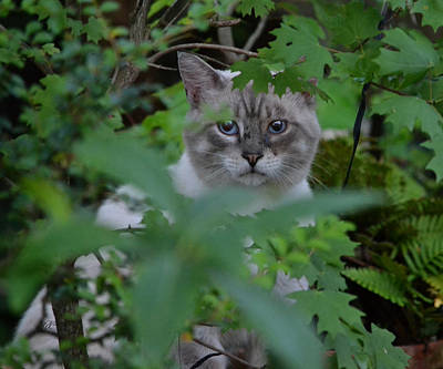 Photograph - Hiding The Cat by rd Erickson