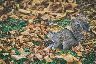 Funny Squirrel Photograph - Hiding The Nut by Martin Newman