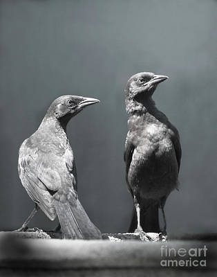 Black Birds Photograph - High Alert by Jan Piller