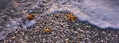 Of Sea Creatures Photograph - High Angle View Of Three Starfish by Panoramic Images