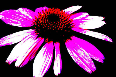 Photograph - High Contrast Flower by David Weeks